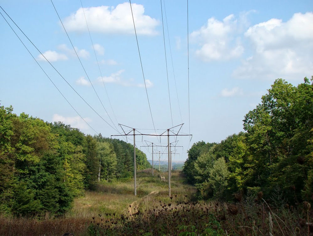 Cables-in-Woods-998x754